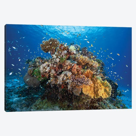 Underwater Biodiversity Canvas Print #BGA26} by Barathieu Gabriel Canvas Art