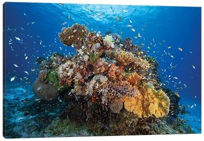 Underwater Biodiversity Canvas Art Print