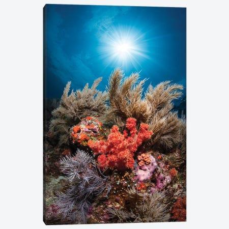 Underwater Life Canvas Print #BGA27} by Barathieu Gabriel Canvas Art