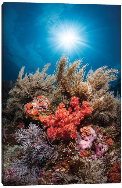Underwater Life Canvas Art Print