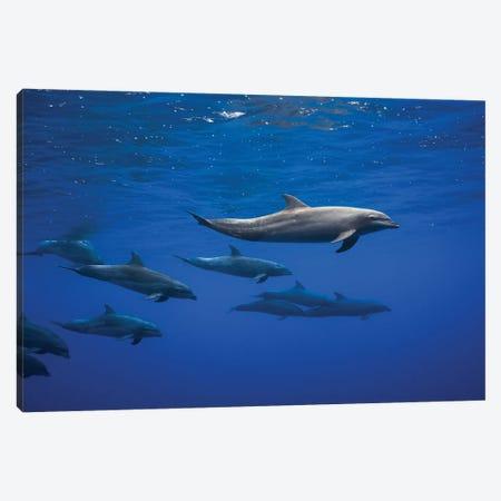 Dolphins Canvas Print #BGA29} by Barathieu Gabriel Art Print