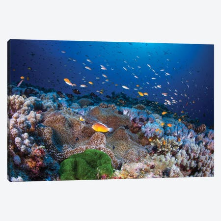 Anemon And Anthias Canvas Print #BGA31} by Barathieu Gabriel Canvas Art