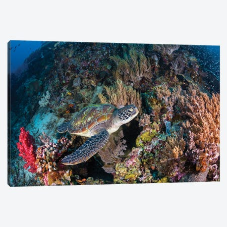 Coral Garden And Green Turtle Canvas Print #BGA32} by Barathieu Gabriel Canvas Wall Art