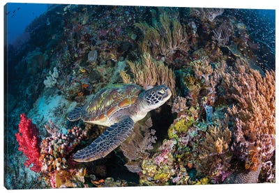Coral Garden And Green Turtle Canvas Art Print