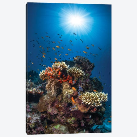 Reef And Sunshine Canvas Print #BGA34} by Barathieu Gabriel Art Print