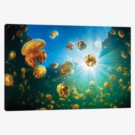 Sunlight And Jellyfish Canvas Print #BGA35} by Barathieu Gabriel Art Print