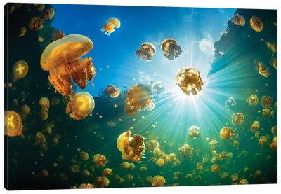 Sunlight And Jellyfish Canvas Art Print