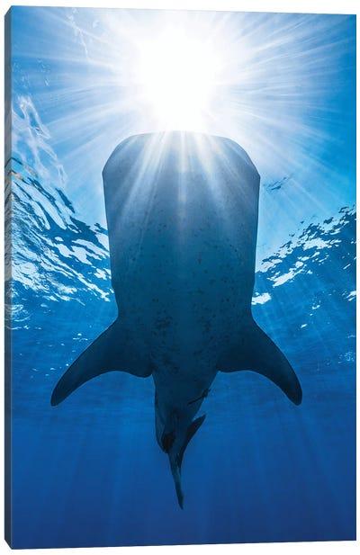 Whale Shark And Sun Canvas Art Print