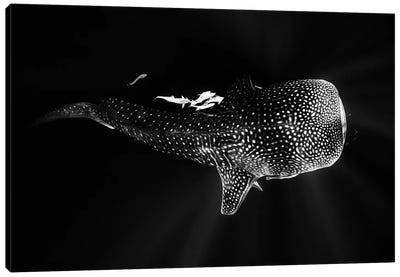 Black And Whale Shark Canvas Art Print