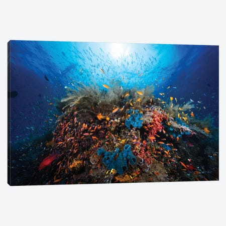 Apnea Canvas Print #BGA6} by Barathieu Gabriel Canvas Print