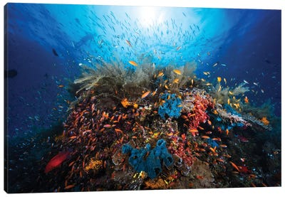 Apnea Canvas Art Print