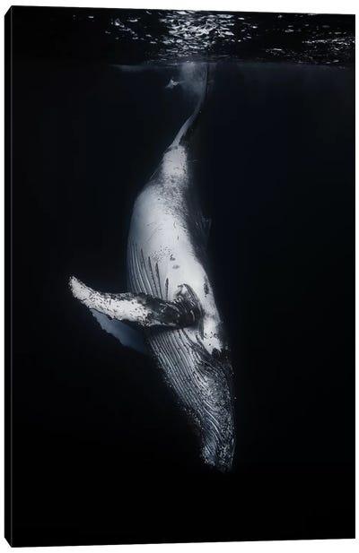Black Whale Canvas Art Print