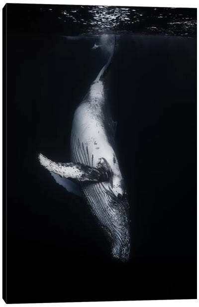 Black Whale Canvas Art Print