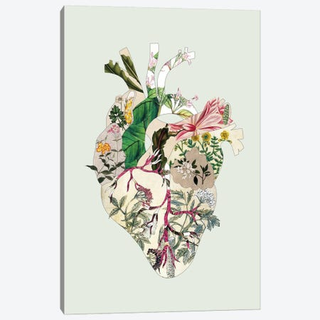 Vinatge Botanical Heart Green Canvas Print #BGR72} by Bianca Green Art Print