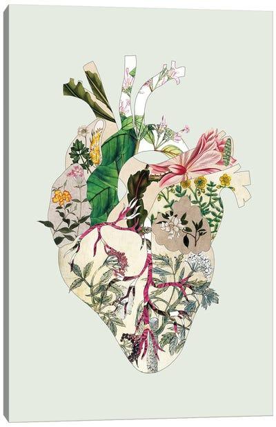 Vinatge Botanical Heart Green Canvas Art Print