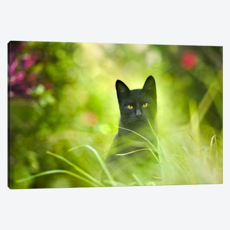 Black Cat Canvas Print #BHE104} by Ben Heine Canvas Print