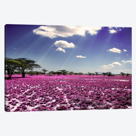 Meadow of Life Canvas Print #BHE114} by Ben Heine Canvas Wall Art