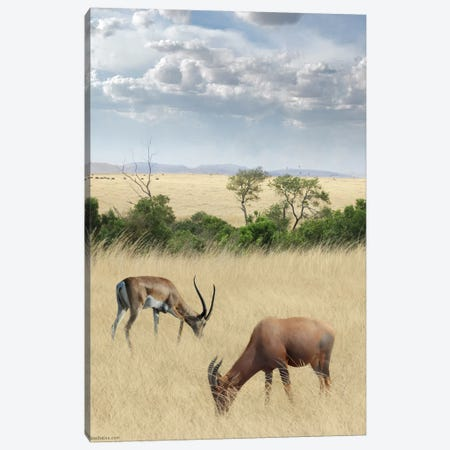 Kenya #2 Canvas Print #BHE159} by Ben Heine Canvas Print