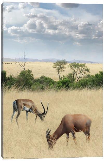 Kenya #2 Canvas Art Print