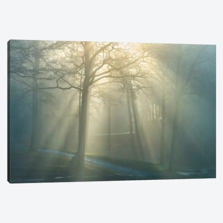 Forest Melody Canvas Print #BHE165} by Ben Heine Canvas Print