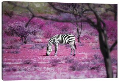 Kenya VII Canvas Print #BHE168