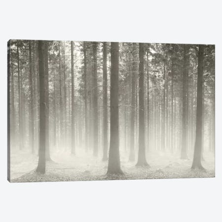 Polish Forest II Canvas Print #BHE169} by Ben Heine Canvas Artwork