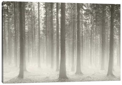 Polish Forest II Canvas Print #BHE169