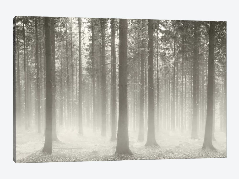 Polish Forest II by Ben Heine 1-piece Art Print