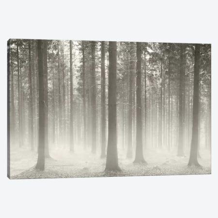 Polish Forest II Canvas Print #BHE169} by Ben Heine Canvas Artwork