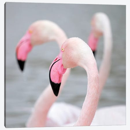 Flamingo I Canvas Print #BHE179} by Ben Heine Canvas Art Print