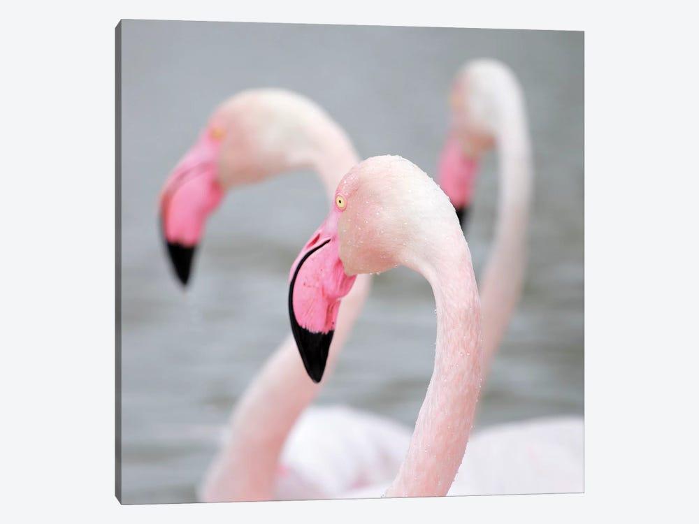 Flamingo I by Ben Heine 1-piece Canvas Wall Art