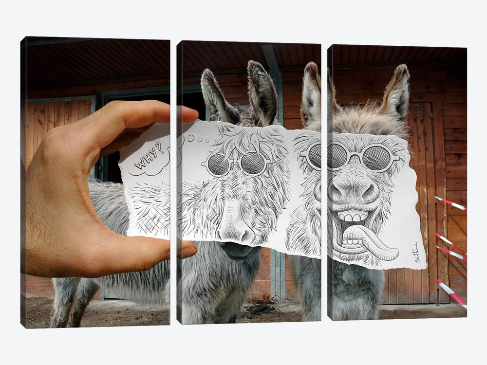 Pencil vs. Camera 12 - Funny Donkeys by Ben Heine 3-piece Canvas Print