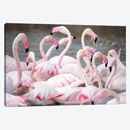 Flamingo II Canvas Print #BHE180} by Ben Heine Canvas Wall Art