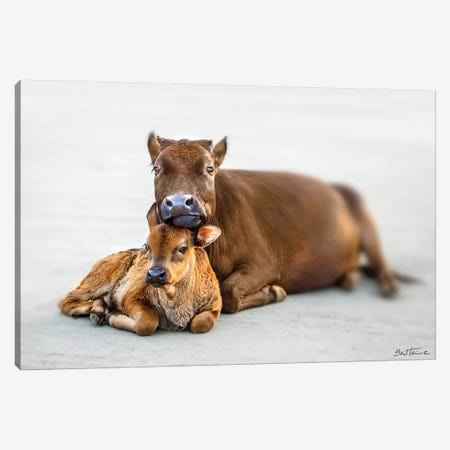 Mother And Son Canvas Print #BHE190} by Ben Heine Art Print