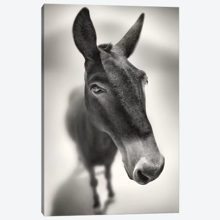 Talking To Me Canvas Print #BHE204} by Ben Heine Canvas Wall Art