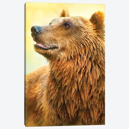 Cute Bear I Canvas Print #BHE273} by Ben Heine Canvas Artwork