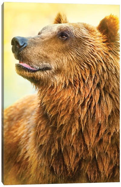 Cute Bear I Canvas Art Print