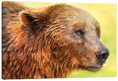 Cute Bear II Canvas Art Print