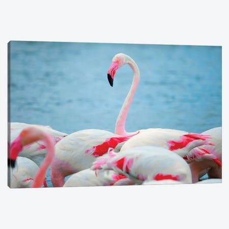 Flamingos II Canvas Print #BHE279} by Ben Heine Canvas Artwork