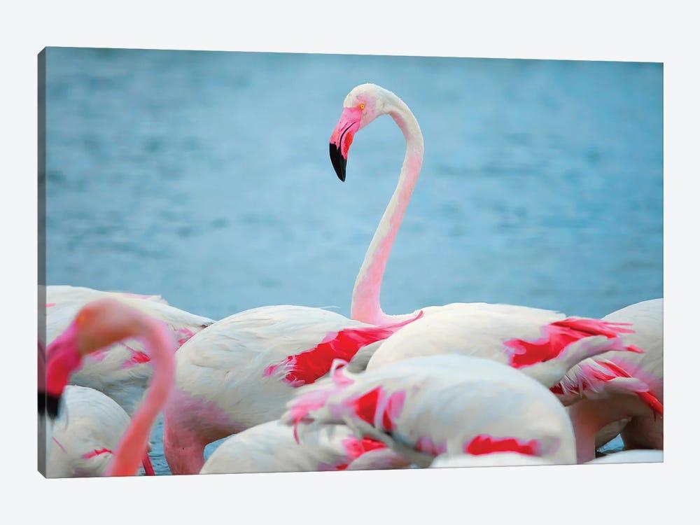 Flamingos II by Ben Heine 1-piece Canvas Wall Art