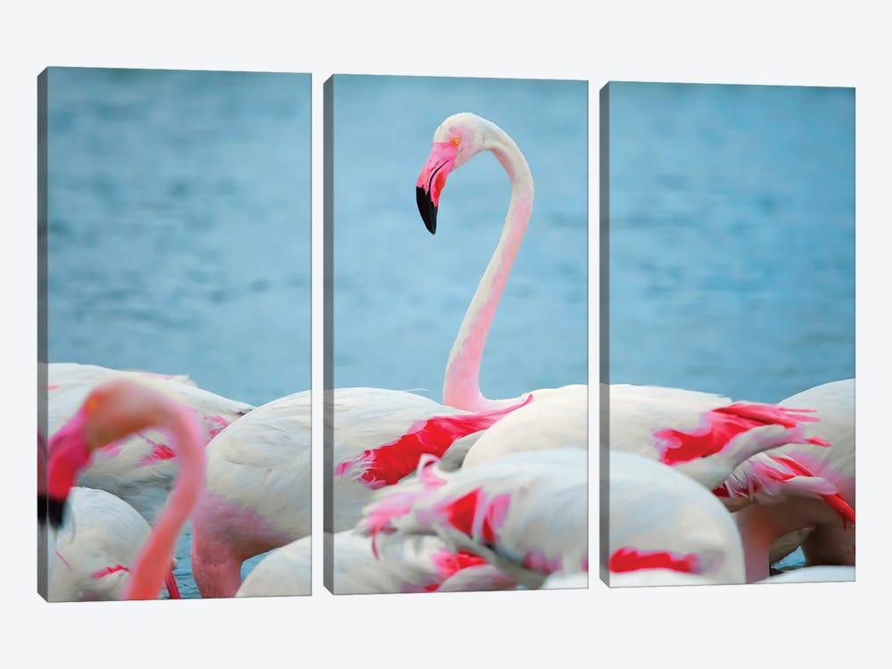 Flamingos II by Ben Heine 3-piece Canvas Art