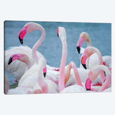 Flamingos III Canvas Print #BHE280} by Ben Heine Art Print