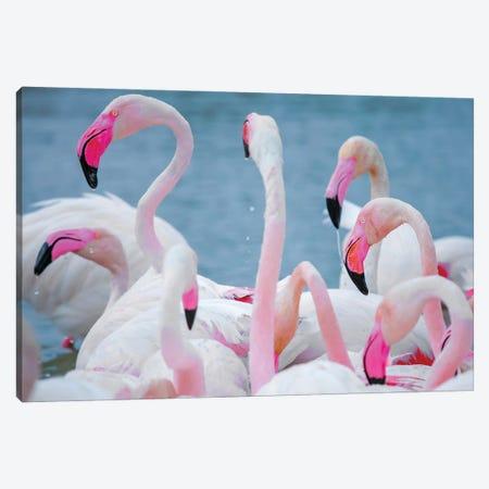 Flamingos III Canvas Print #BHE280} by Ben Heine Art Print