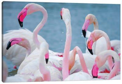 Flamingos III Canvas Art Print