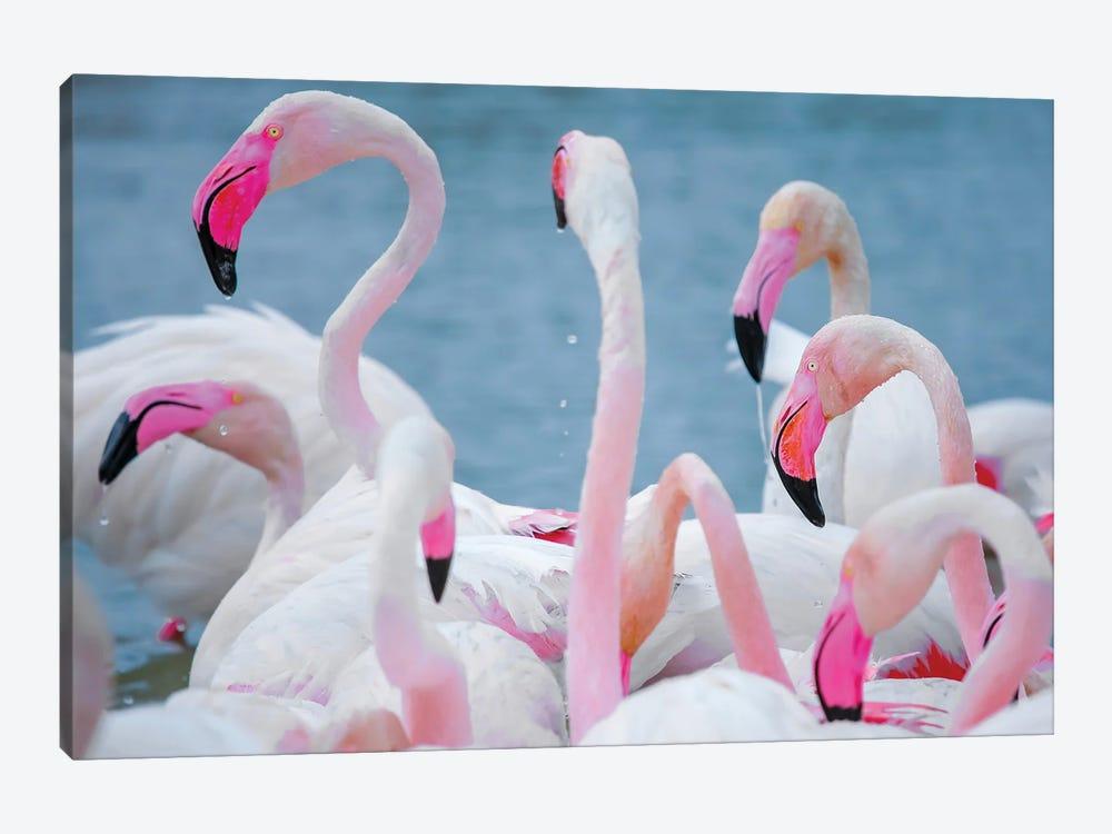 Flamingos III by Ben Heine 1-piece Canvas Art