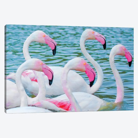 Flamingos V Canvas Print #BHE282} by Ben Heine Canvas Print