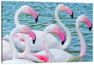 Flamingos V Canvas Art Print
