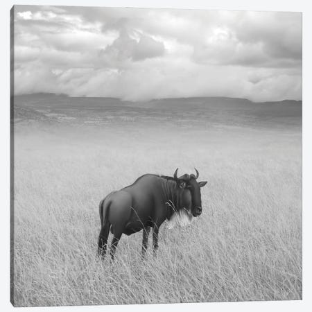 Once Upon A Time In Kenya IV Canvas Print #BHE298} by Ben Heine Canvas Artwork