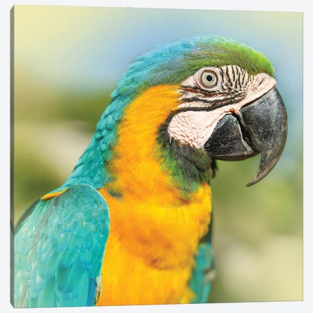 Parrot Canvas Print #BHE300} by Ben Heine Canvas Artwork