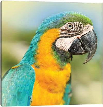 Parrot Canvas Art Print